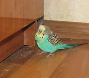попугай теряет равновесие фото