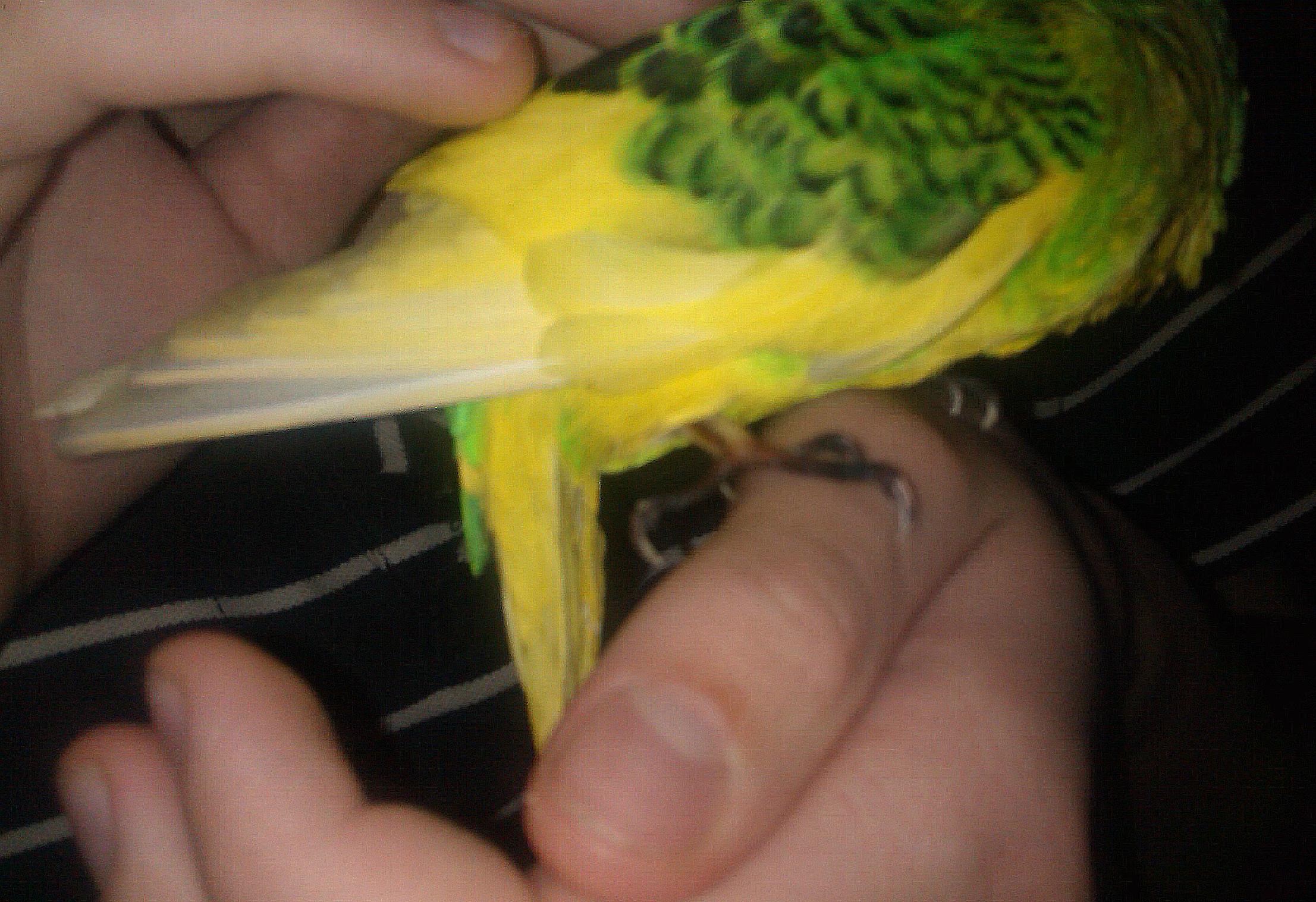 почернение лапок у попугаев