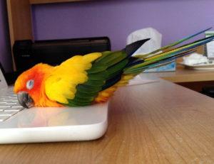 жидкий помет у попугая фото
