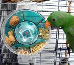 попугай не ест новый корм фото