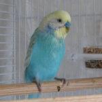 попугай бьётся в конвульсиях и судорогах фото