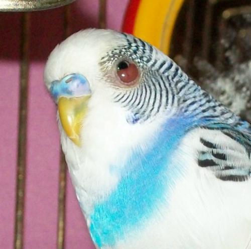 попугай поранил глаз