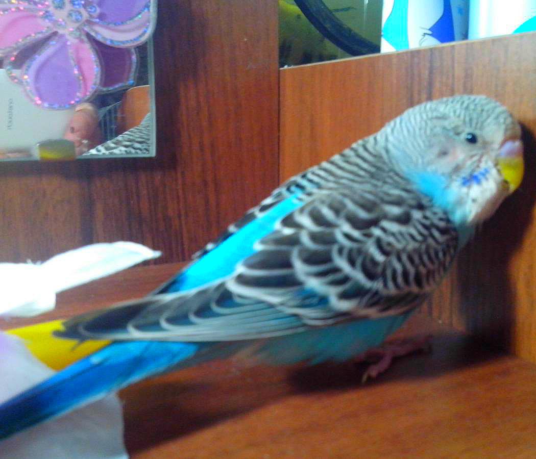 попугай стал вялым