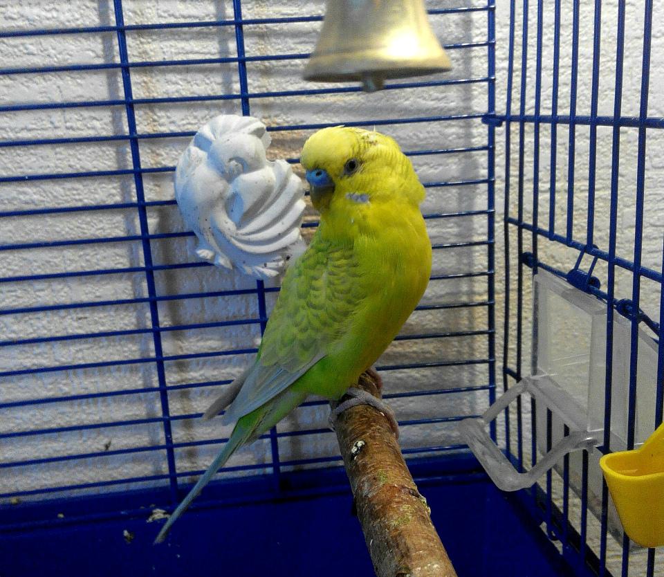 попугая тошнит