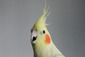 попугай открывает клюв и вытягивает шею фото