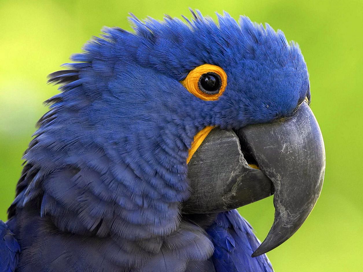у попугая сухой клюв