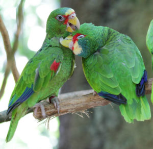 одышка у попугаев фото