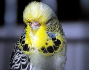 средство от клещей для попугаев фото