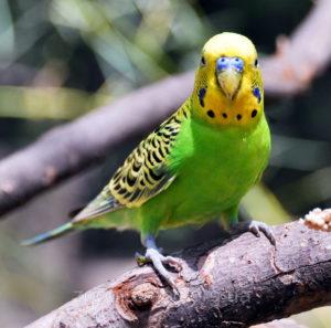 стресс у попугая фото
