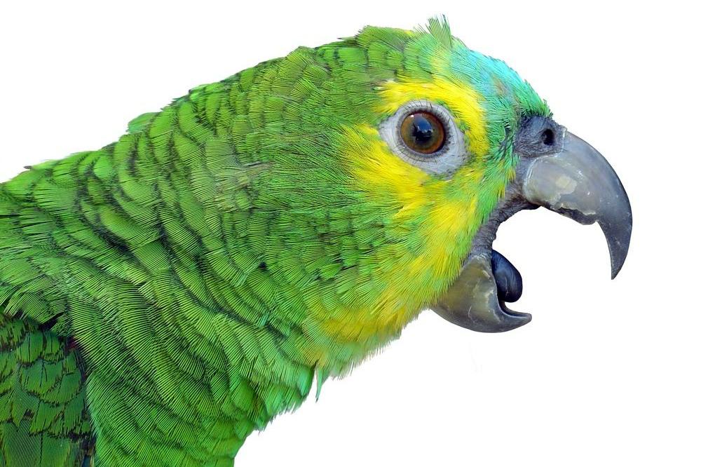 у попугая идет кровь из клюва