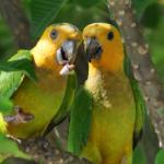 Попугай грызет под крылом — о чем говорит данный симптом?