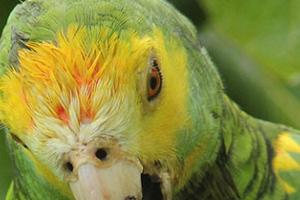 попугай грызет под крылом причины