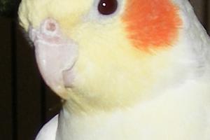 попугай не спит в клетке