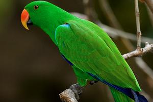 попугай перестал говорить