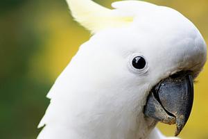 попугай перестал разговаривать помощь
