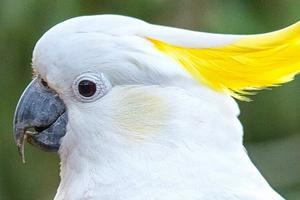 попугай перестал разговаривать причины