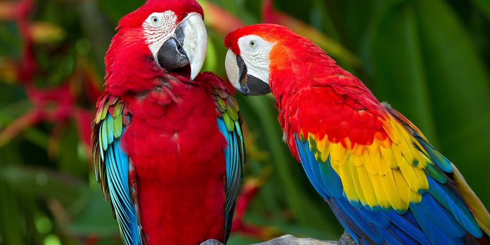 попугай перестал разговаривать