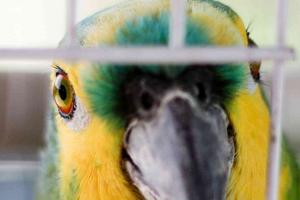 попугай сильно кричит по утрам