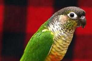 попугай не дышит носом
