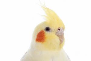 у попугая не дышит нос причины