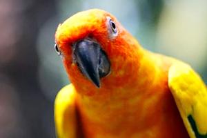 бешенство у попугаев симптомы