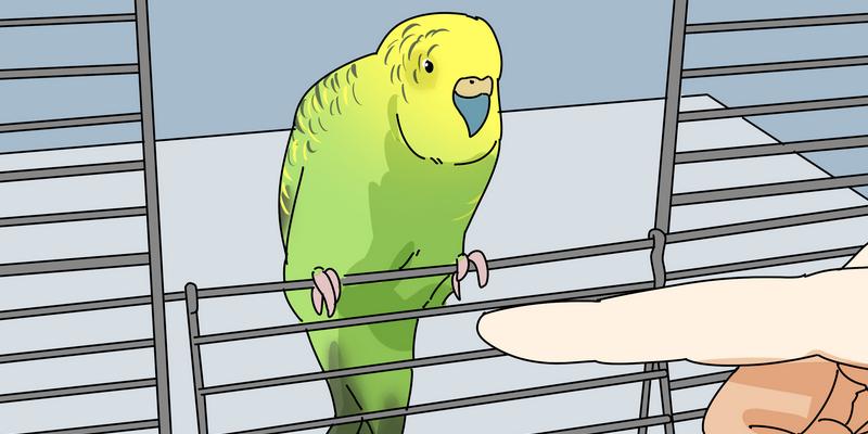 бешенство у попугаев