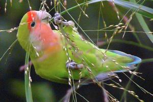 испуг у попугаев причины
