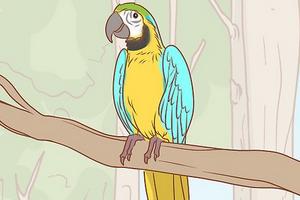 истощение у попугая симптомы