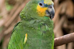 отвалился клюв у попугая