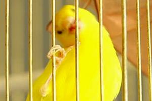 попугай не выходит из клетки три дня