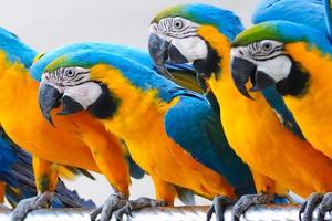 попугай простыл лечение