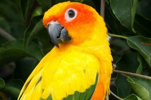 попугай простыл симптомы