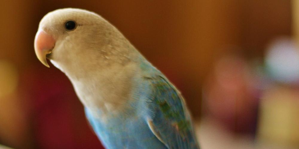 попугай простыл