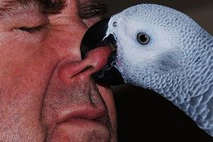 попугай стал кусаться причины
