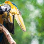 Как определить наличие пухопероедов у попугая?