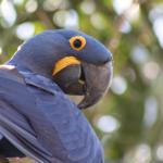 Где попугай может подхватить сальмонеллез?
