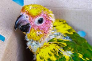 симптомы болезни печени у попугая
