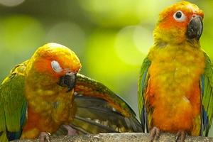 слабость у попугая без видимых причин