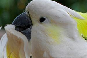 у попугая инсульт лечение