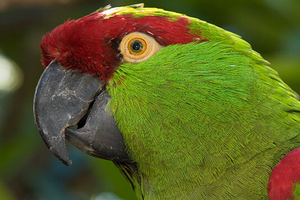 у попугая кривой клюв