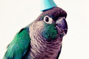 у попугая неприятный запах из клюва