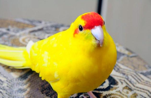 Какарики и другие птицы