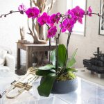 Как выращивать орхидею?