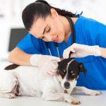 Когда нужно срочно обращаться в ветеринарную клинику?