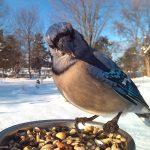 Какой бывает корм для птиц?