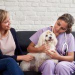 В каких случаях нужно вызывать ветеринара на дом